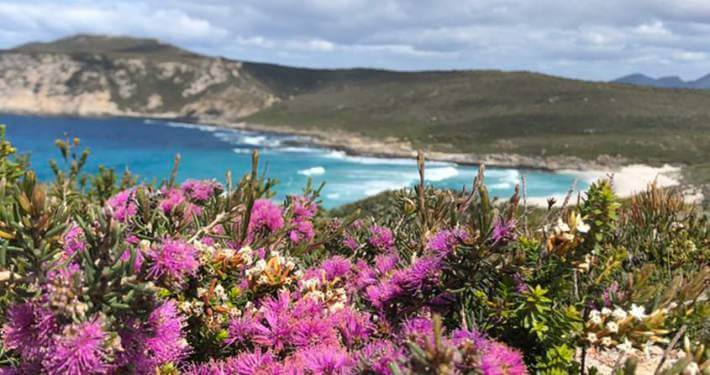 wildflower tours western australia 3